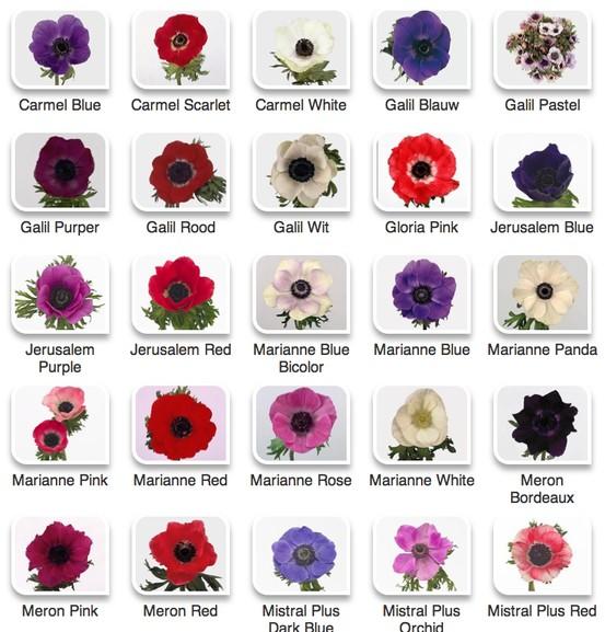 anemones chart flirty fleurs